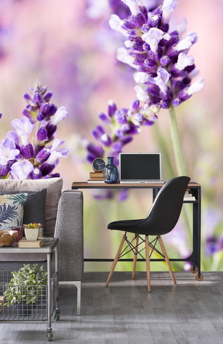 Bloemen, planten en bomen Lavendel bloem 8