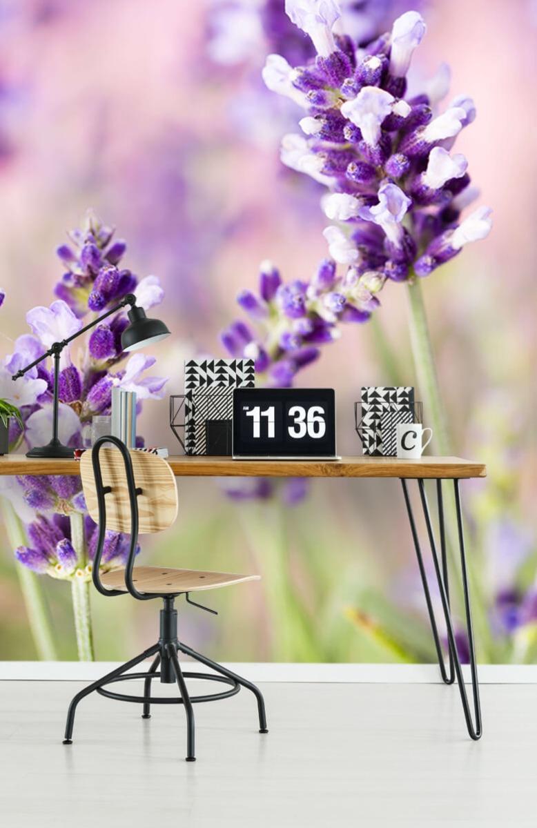 Bloemen, planten en bomen Lavendel bloem 9