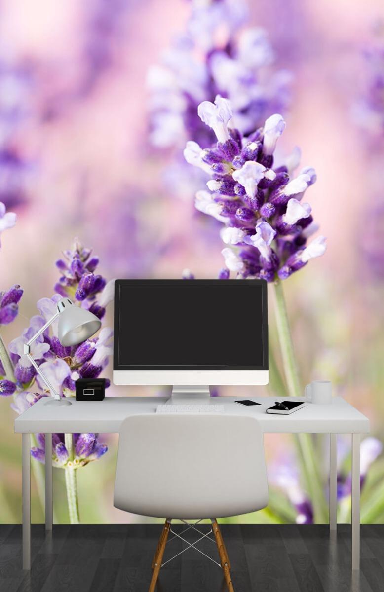 Bloemen, planten en bomen Lavendel bloem 10