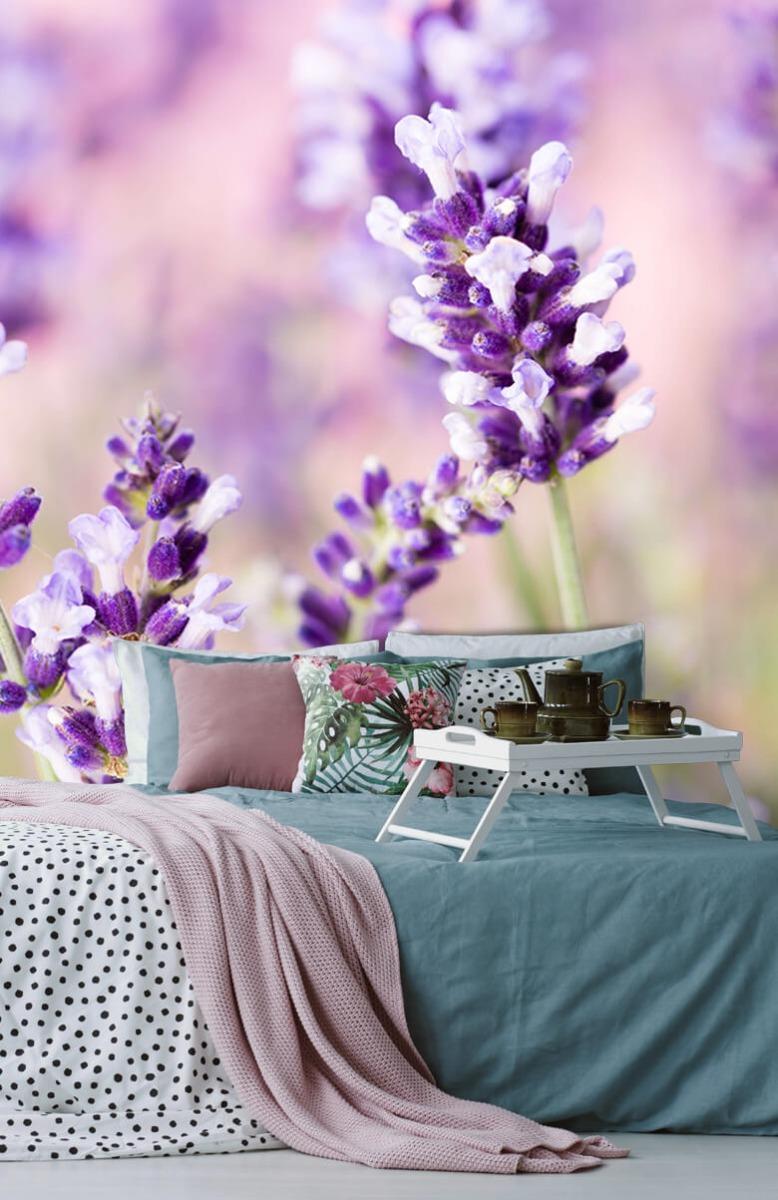 Bloemen, planten en bomen Lavendel bloem 12