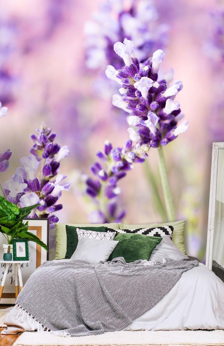 Bloemen, planten en bomen Lavendel bloem 13