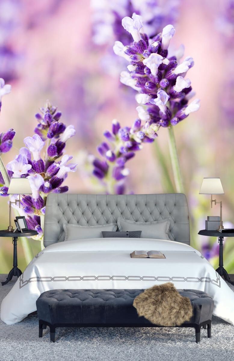 Bloemen, planten en bomen Lavendel bloem 14