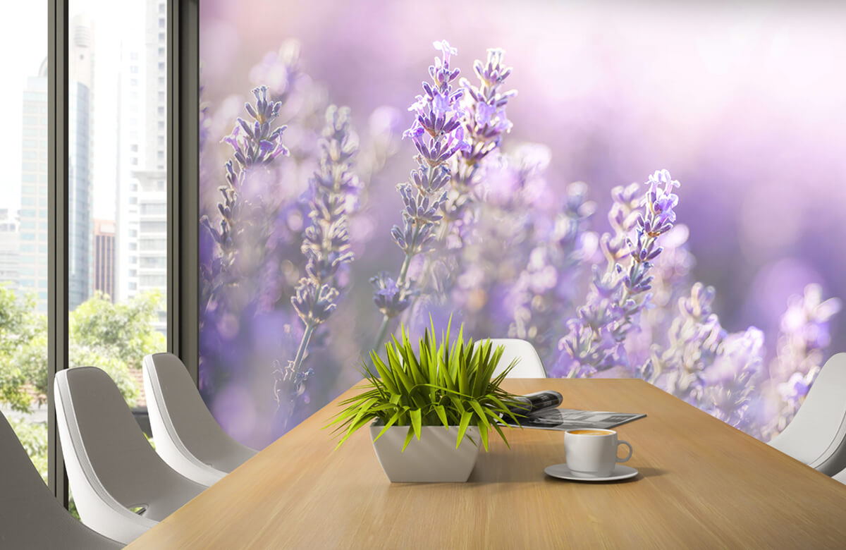Bloemen, planten en bomen Dromerig lavendel 3