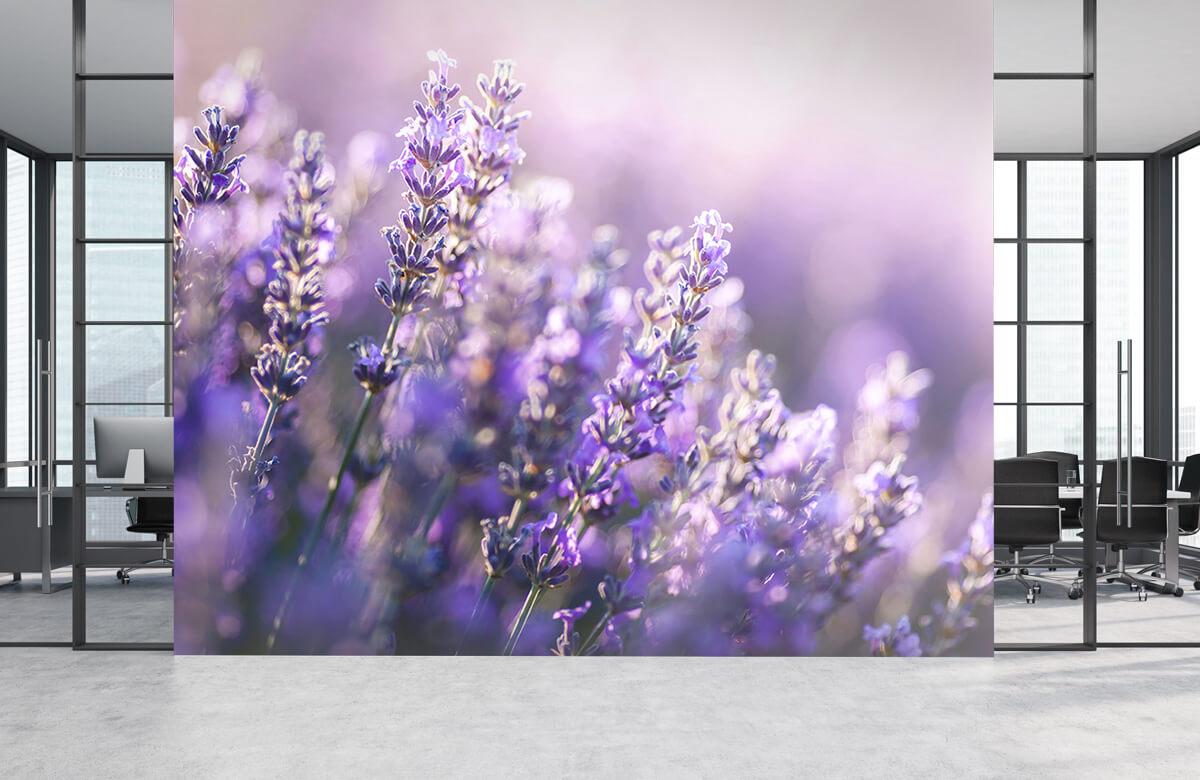 Bloemen, planten en bomen Dromerig lavendel 4
