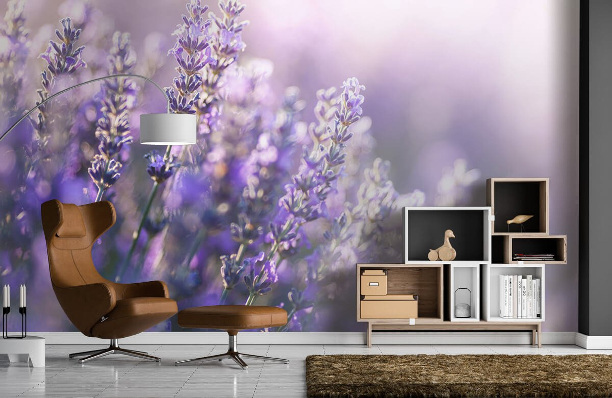 Bloemen, planten en bomen Dromerig lavendel 1