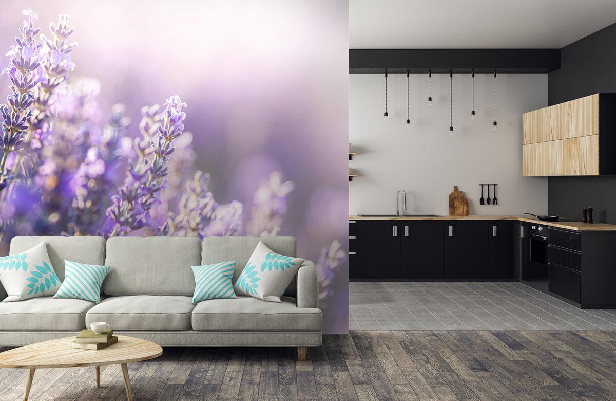 Bloemen, planten en bomen Dromerig lavendel 5