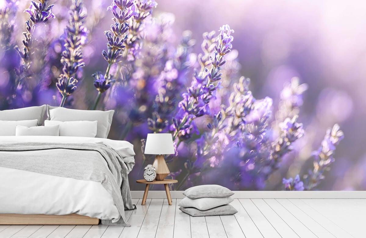 Bloemen, planten en bomen Dromerig lavendel 7