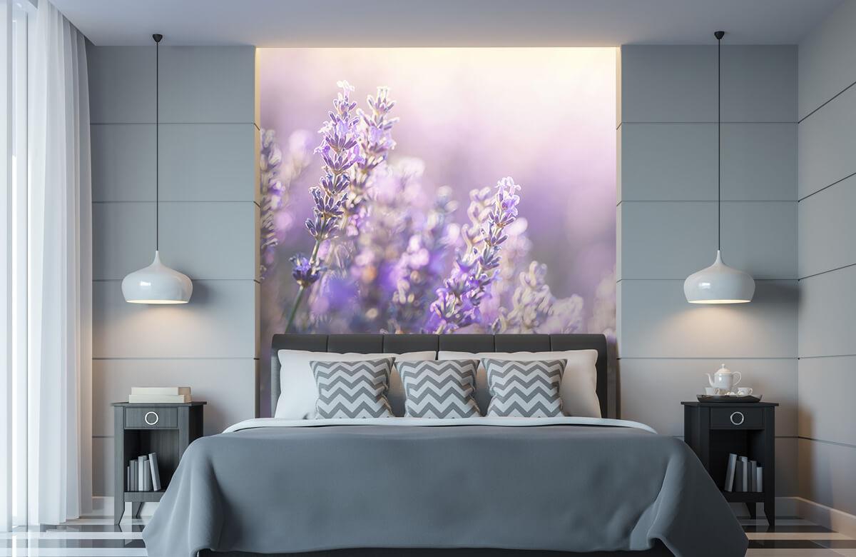 Bloemen, planten en bomen Dromerig lavendel 8
