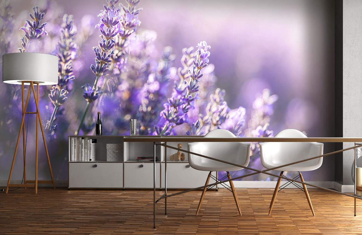 Bloemen, planten en bomen Dromerig lavendel 11