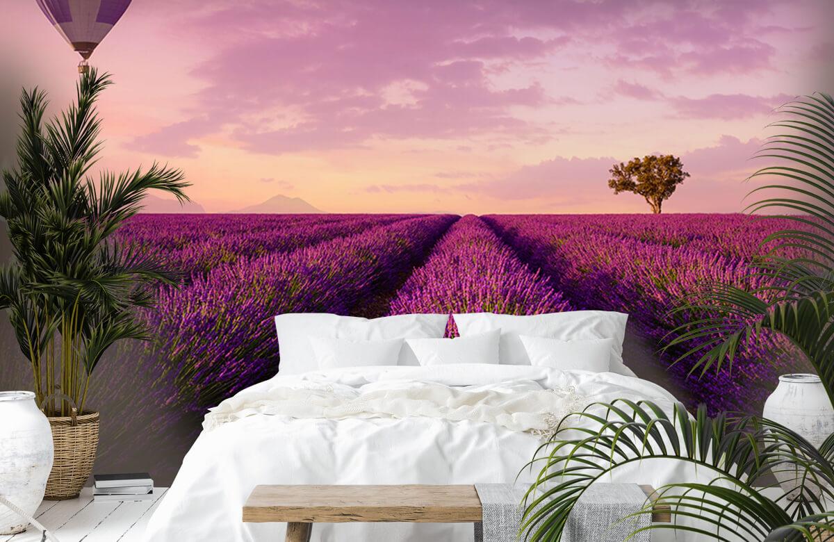Bloemen, planten en bomen Lavendel veld en luchtballon 6