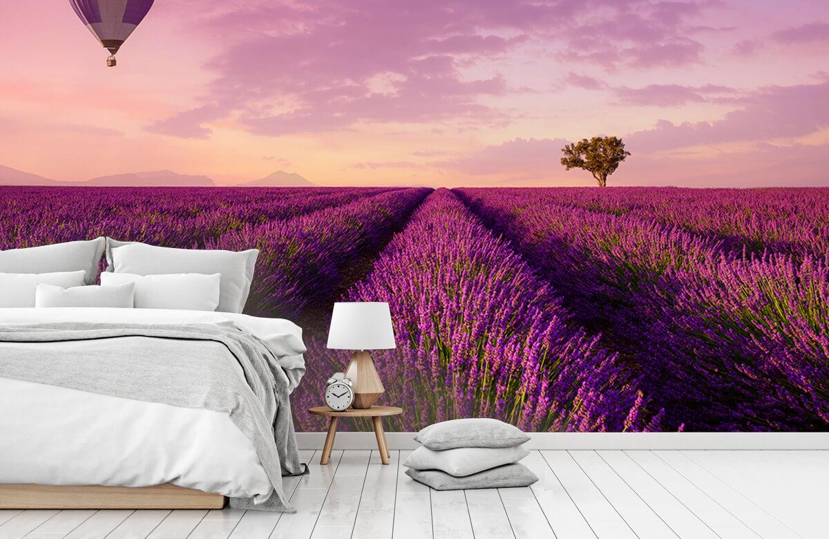 Bloemen, planten en bomen Lavendel veld en luchtballon 7