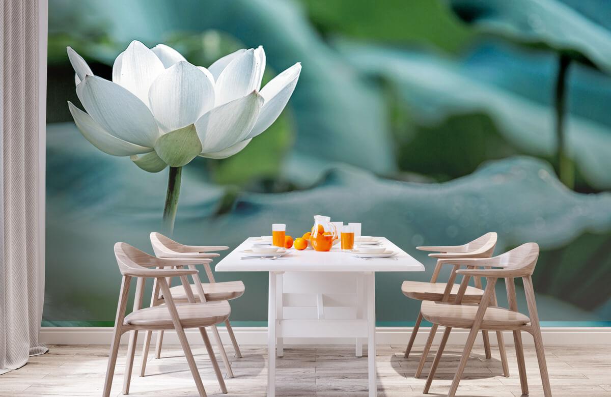 Bloemen, planten en bomen Witte lotusbloem 2
