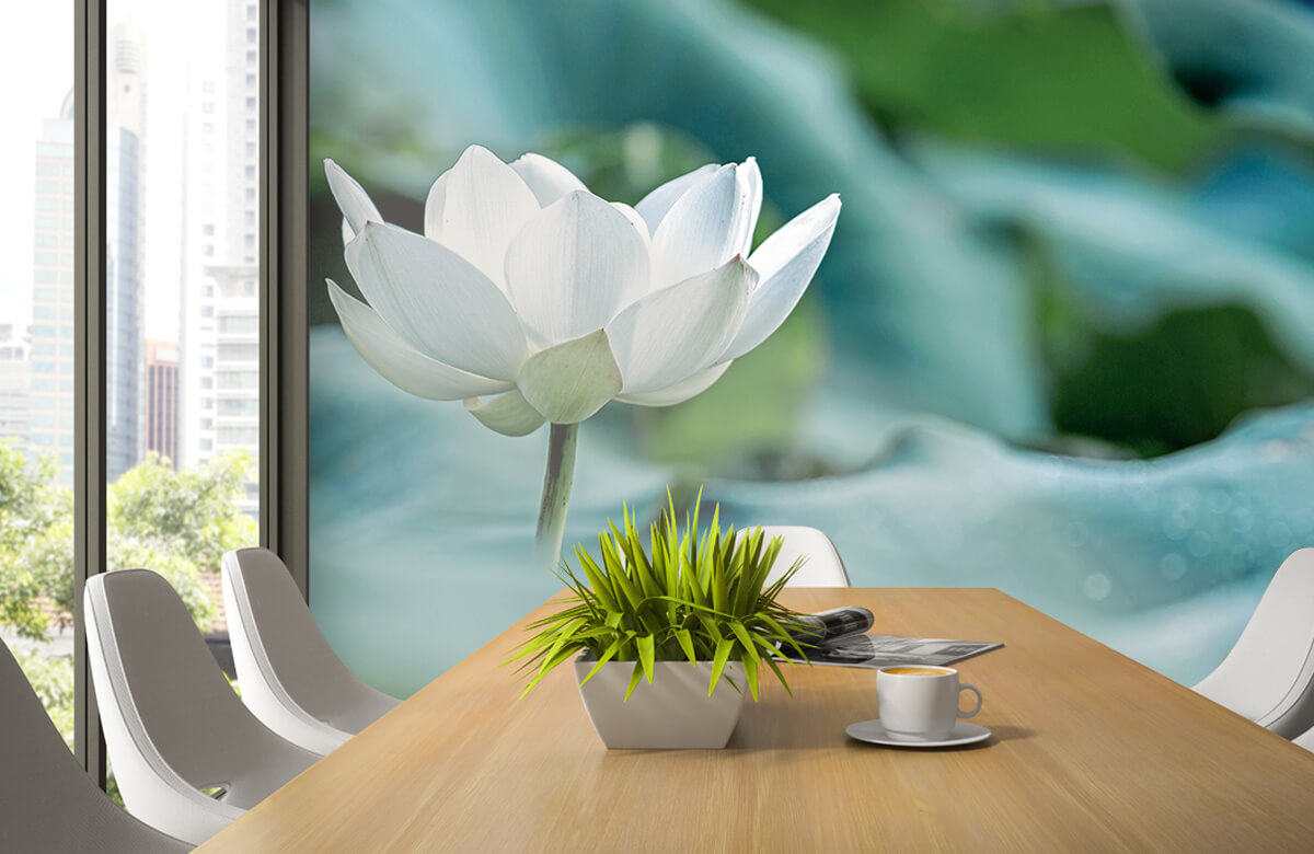Bloemen, planten en bomen Witte lotusbloem 1