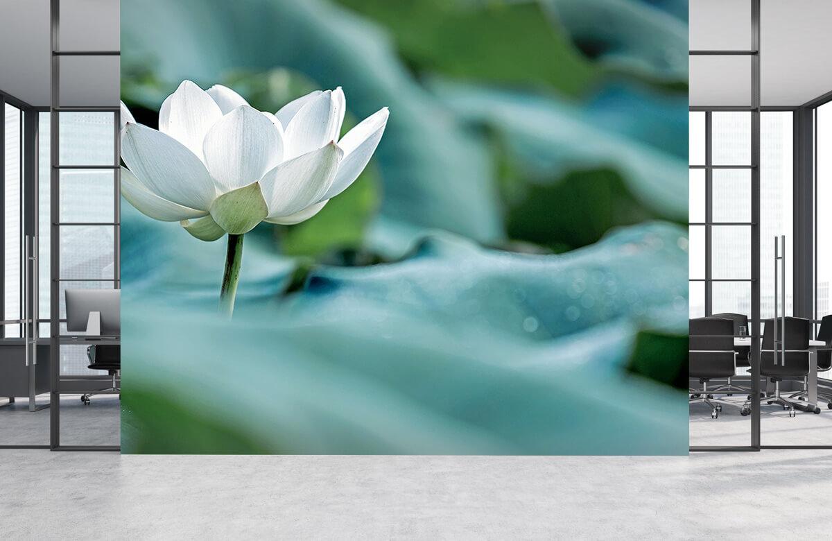 Bloemen, planten en bomen Witte lotusbloem 3
