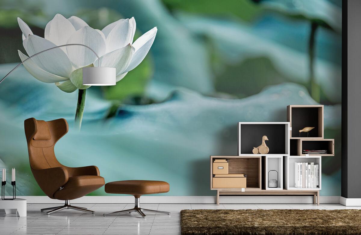Bloemen, planten en bomen Witte lotusbloem 4
