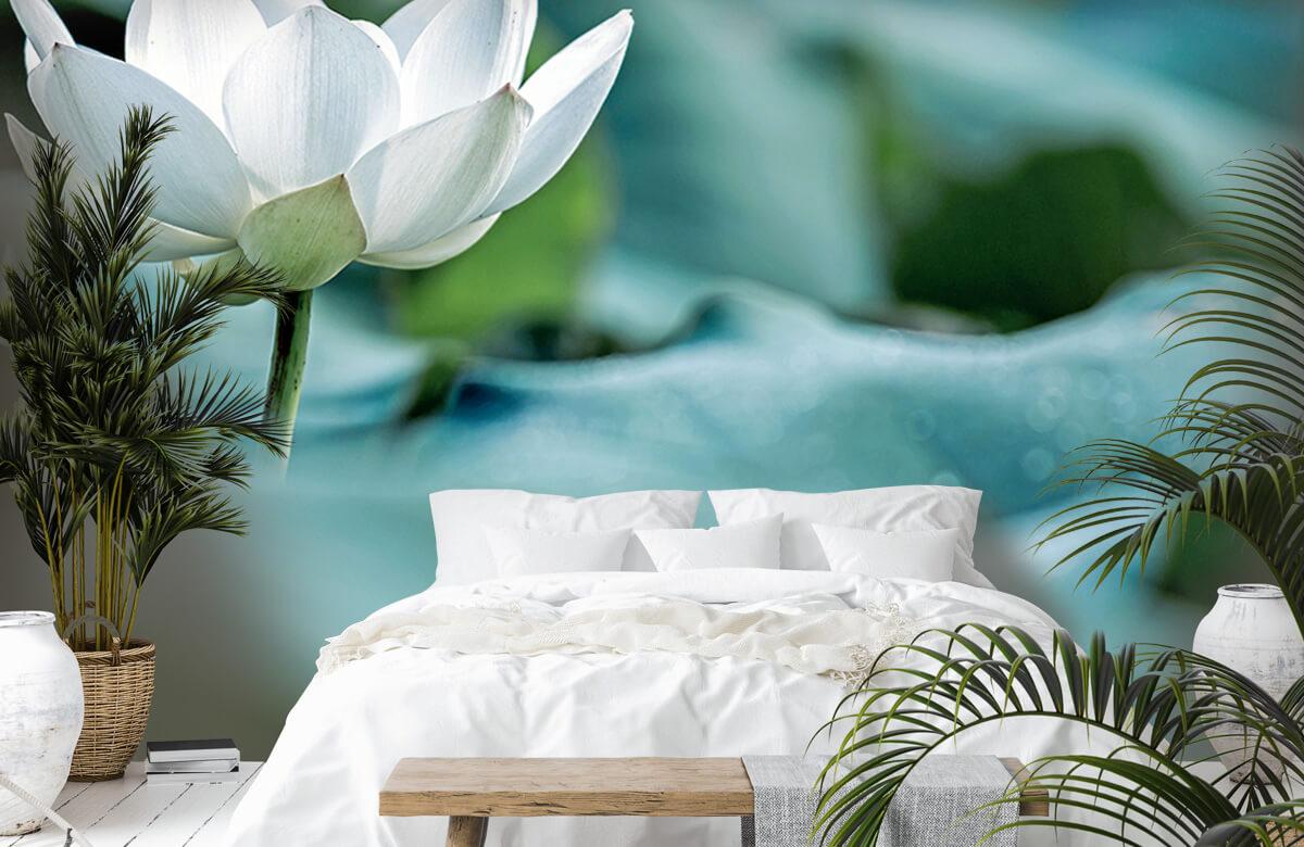Bloemen, planten en bomen Witte lotusbloem 6