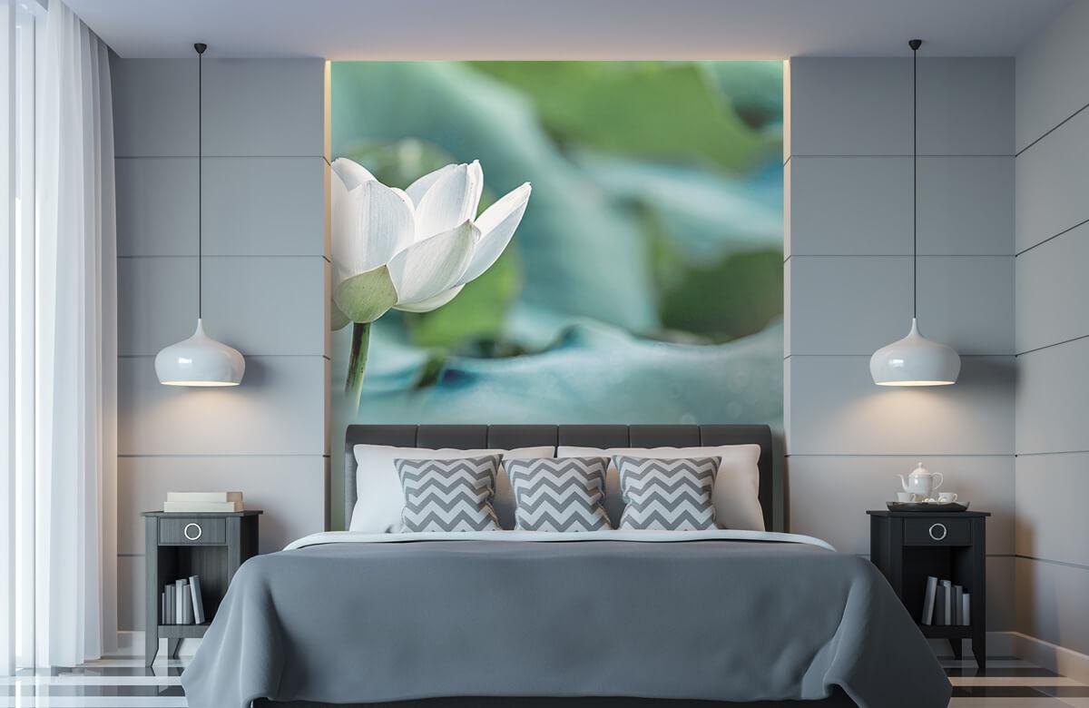 Bloemen, planten en bomen Witte lotusbloem 8