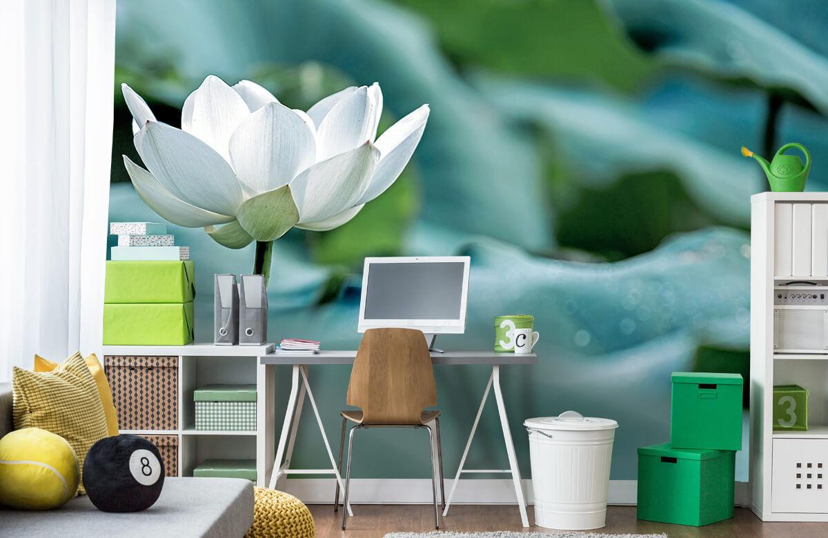 Bloemen, planten en bomen Witte lotusbloem 9