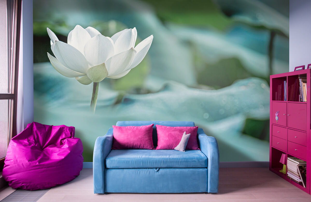 Bloemen, planten en bomen Witte lotusbloem 10