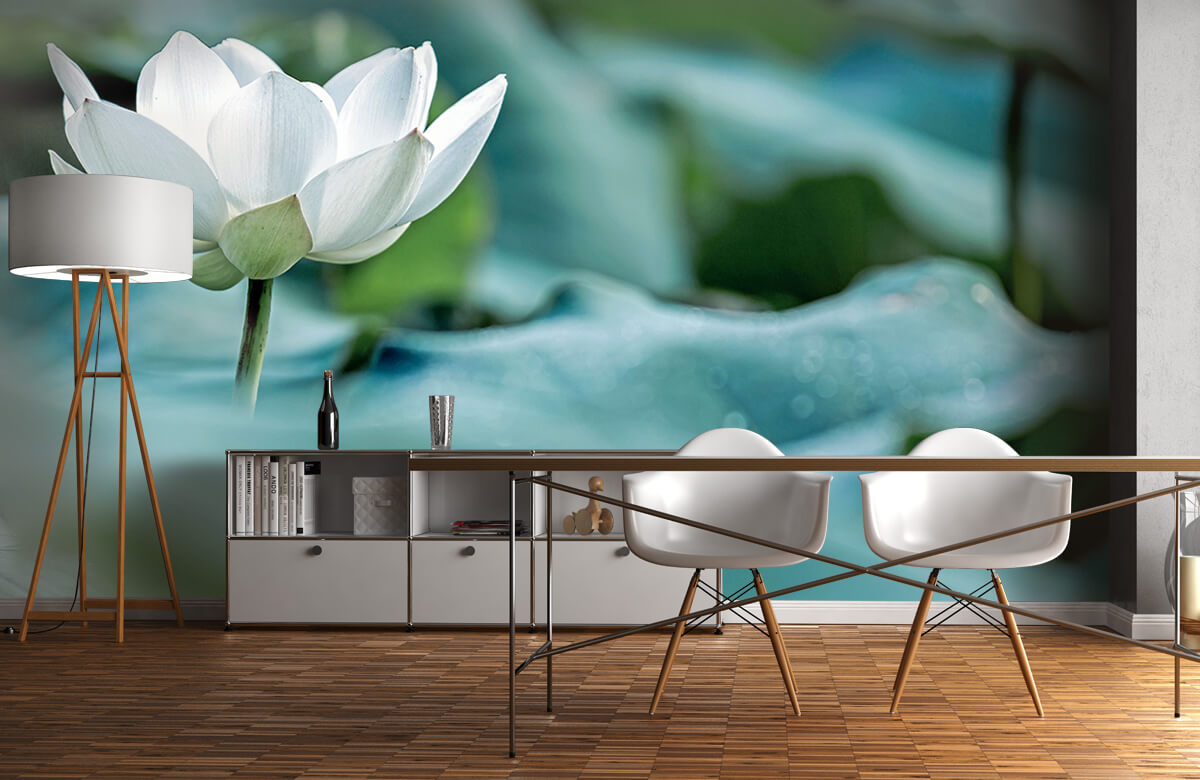Bloemen, planten en bomen Witte lotusbloem 11