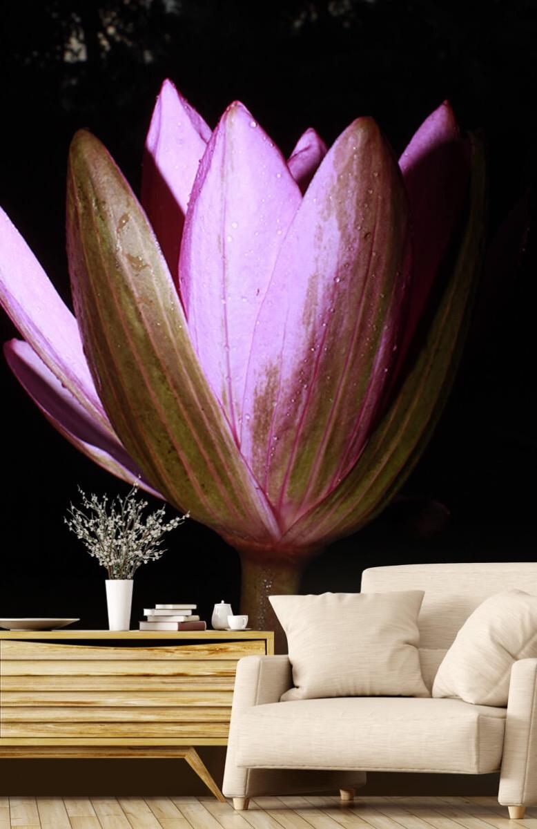 Bloemen, planten en bomen Zijkant lotusbloem 2