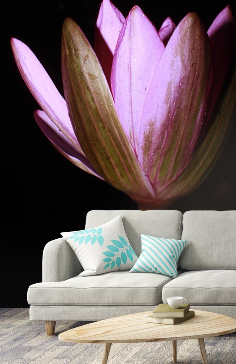 Bloemen, planten en bomen Zijkant lotusbloem 3