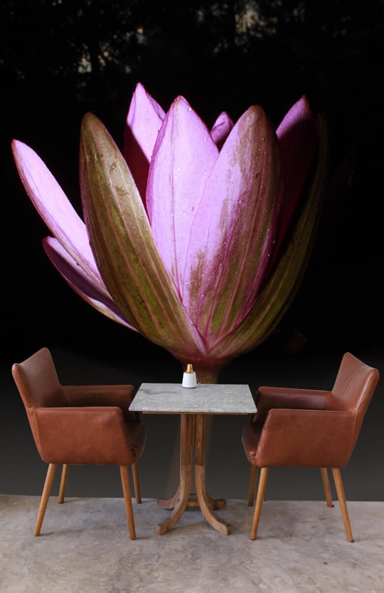 Bloemen, planten en bomen Zijkant lotusbloem 4