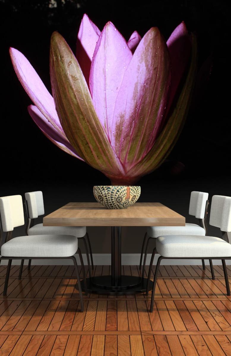 Bloemen, planten en bomen Zijkant lotusbloem 1