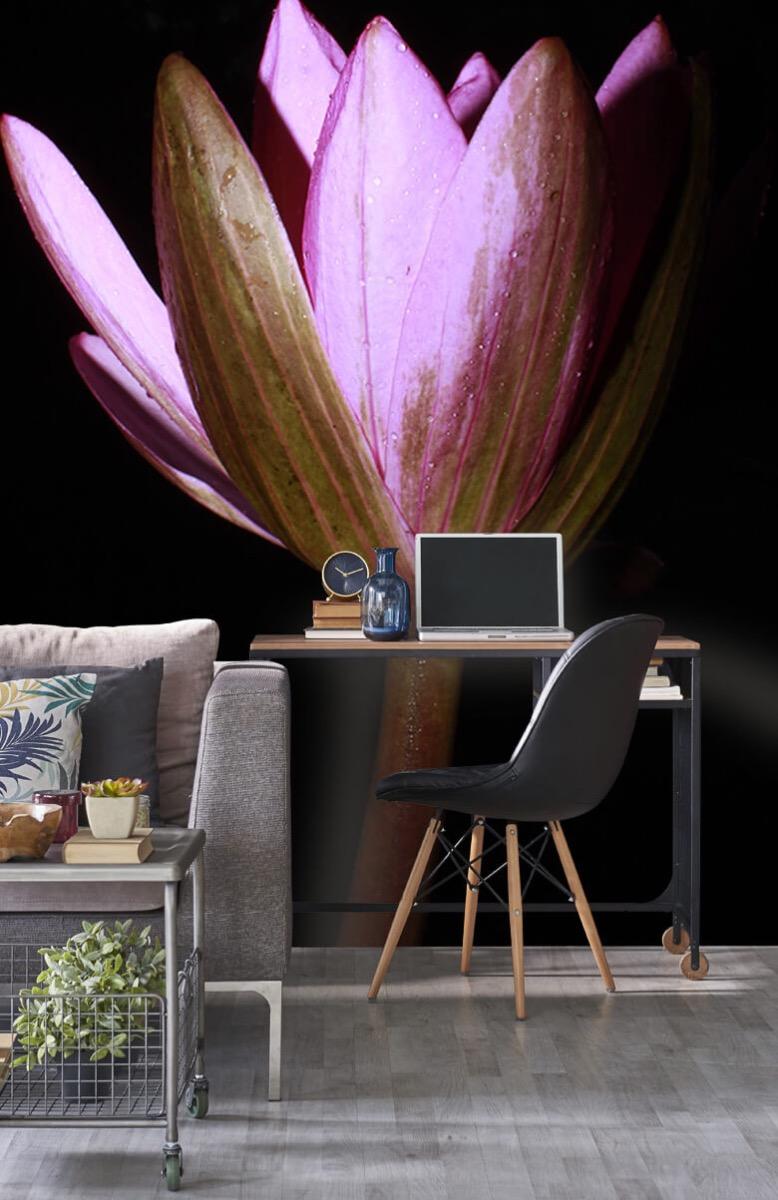 Bloemen, planten en bomen Zijkant lotusbloem 8