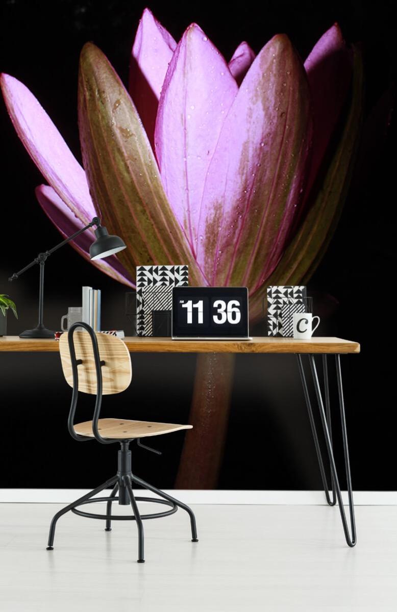 Bloemen, planten en bomen Zijkant lotusbloem 9