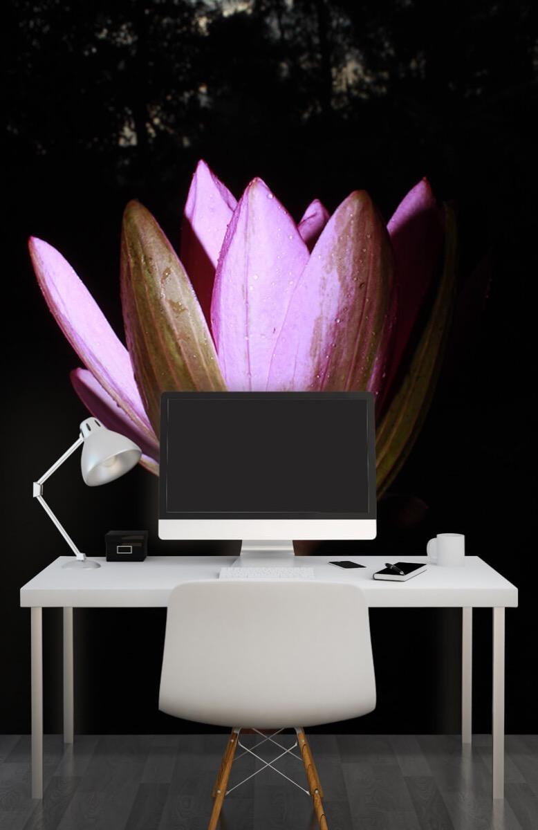 Bloemen, planten en bomen Zijkant lotusbloem 10