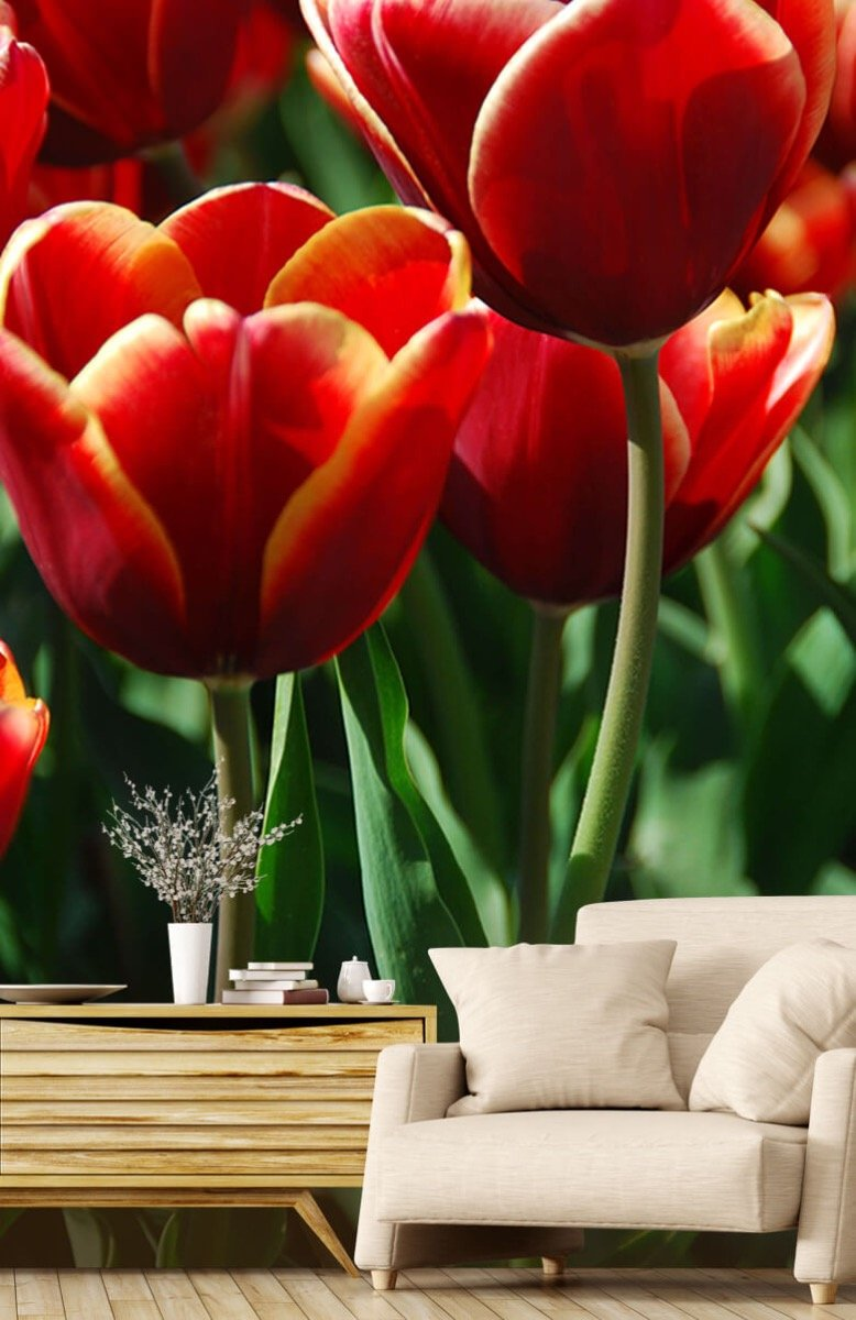 Bloemen, planten en bomen Close-up rode tulpen 2