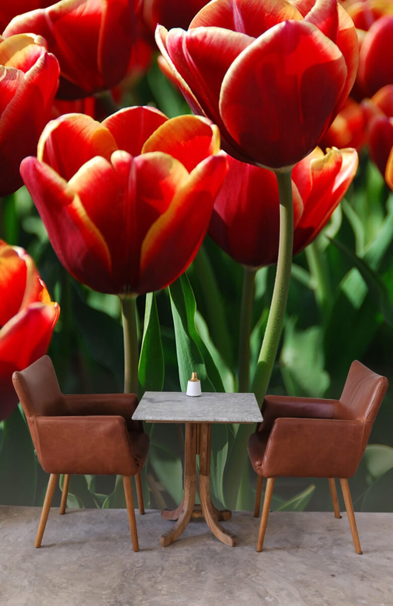 Bloemen, planten en bomen Close-up rode tulpen 4