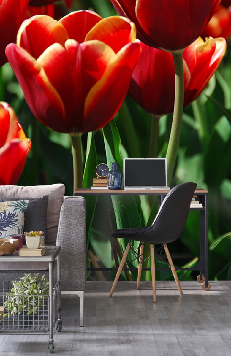 Bloemen, planten en bomen Close-up rode tulpen 8