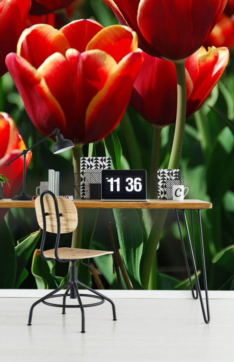 Bloemen, planten en bomen Close-up rode tulpen 9
