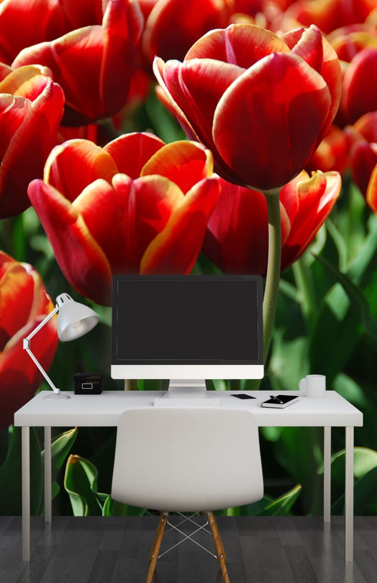 Bloemen, planten en bomen Close-up rode tulpen 10