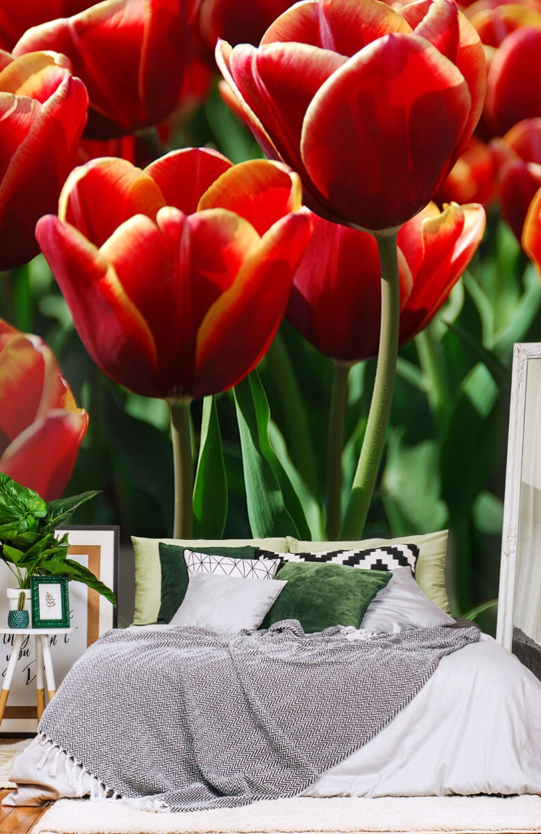Bloemen, planten en bomen Close-up rode tulpen 13
