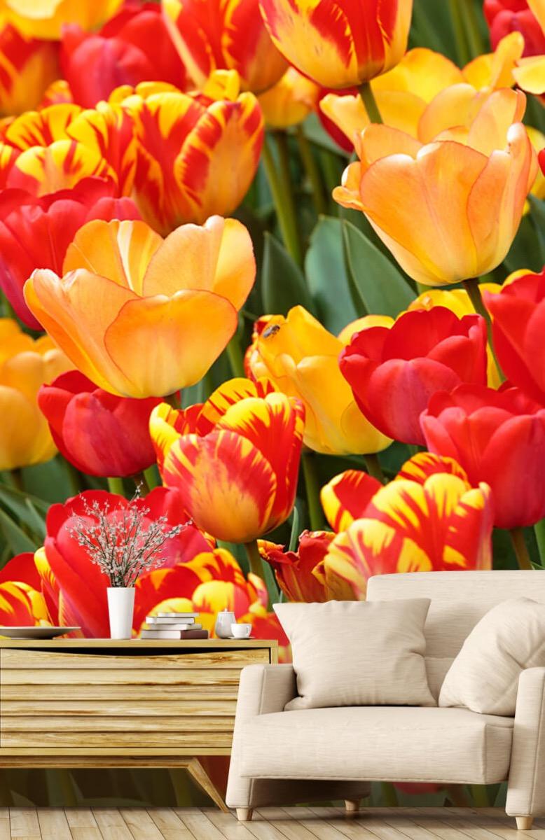 Bloemen, planten en bomen Gekleurde tulpen 2