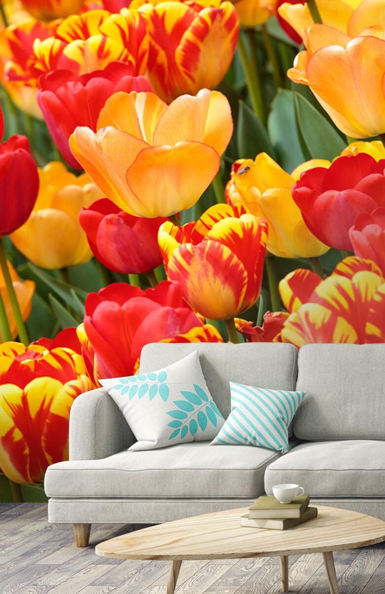 Bloemen, planten en bomen Gekleurde tulpen 3