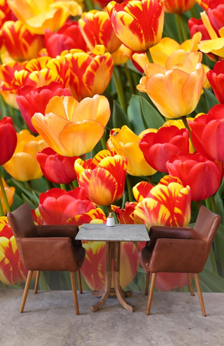 Bloemen, planten en bomen Gekleurde tulpen 4