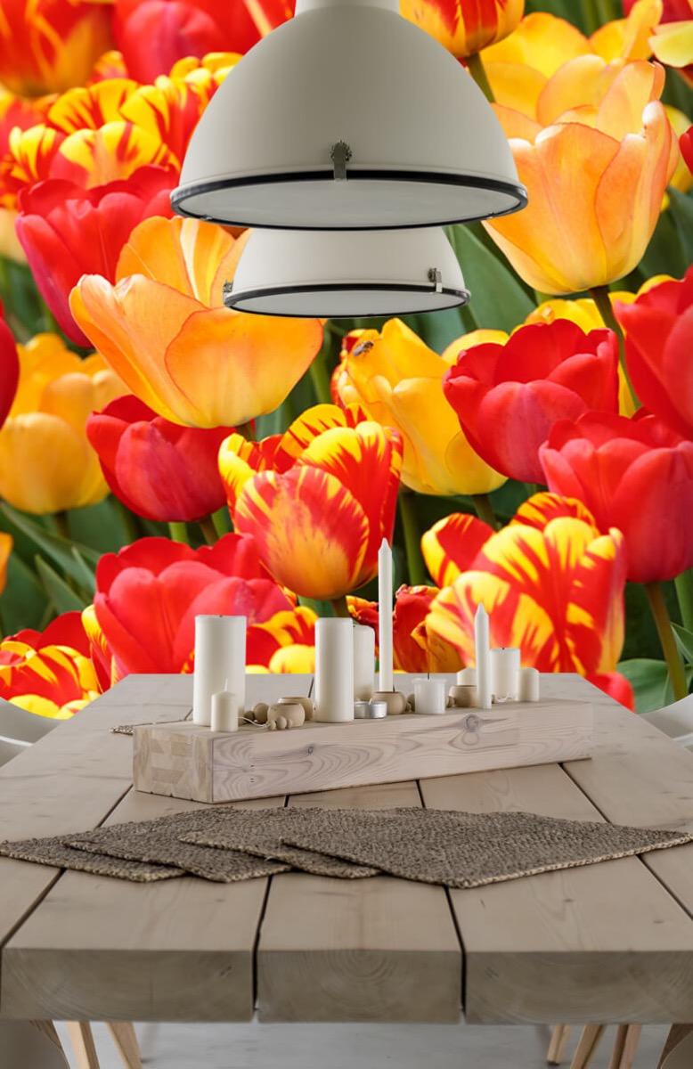 Bloemen, planten en bomen Gekleurde tulpen 5