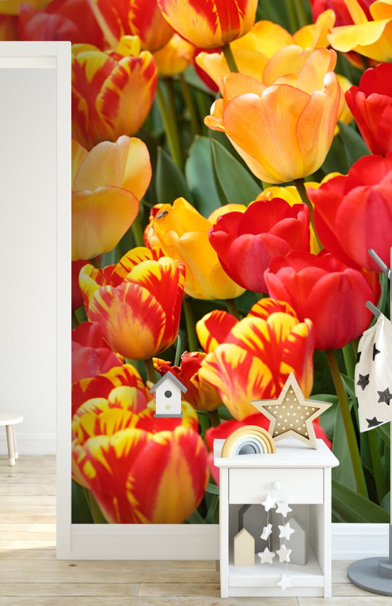Bloemen, planten en bomen Gekleurde tulpen 7