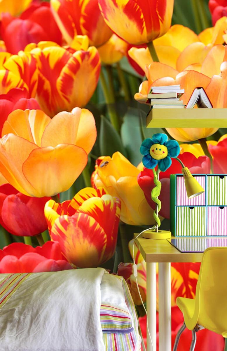 Bloemen, planten en bomen Gekleurde tulpen 8