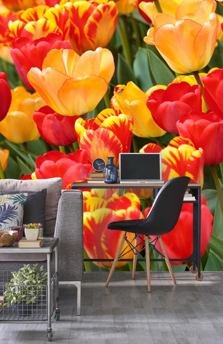 Bloemen, planten en bomen Gekleurde tulpen 9