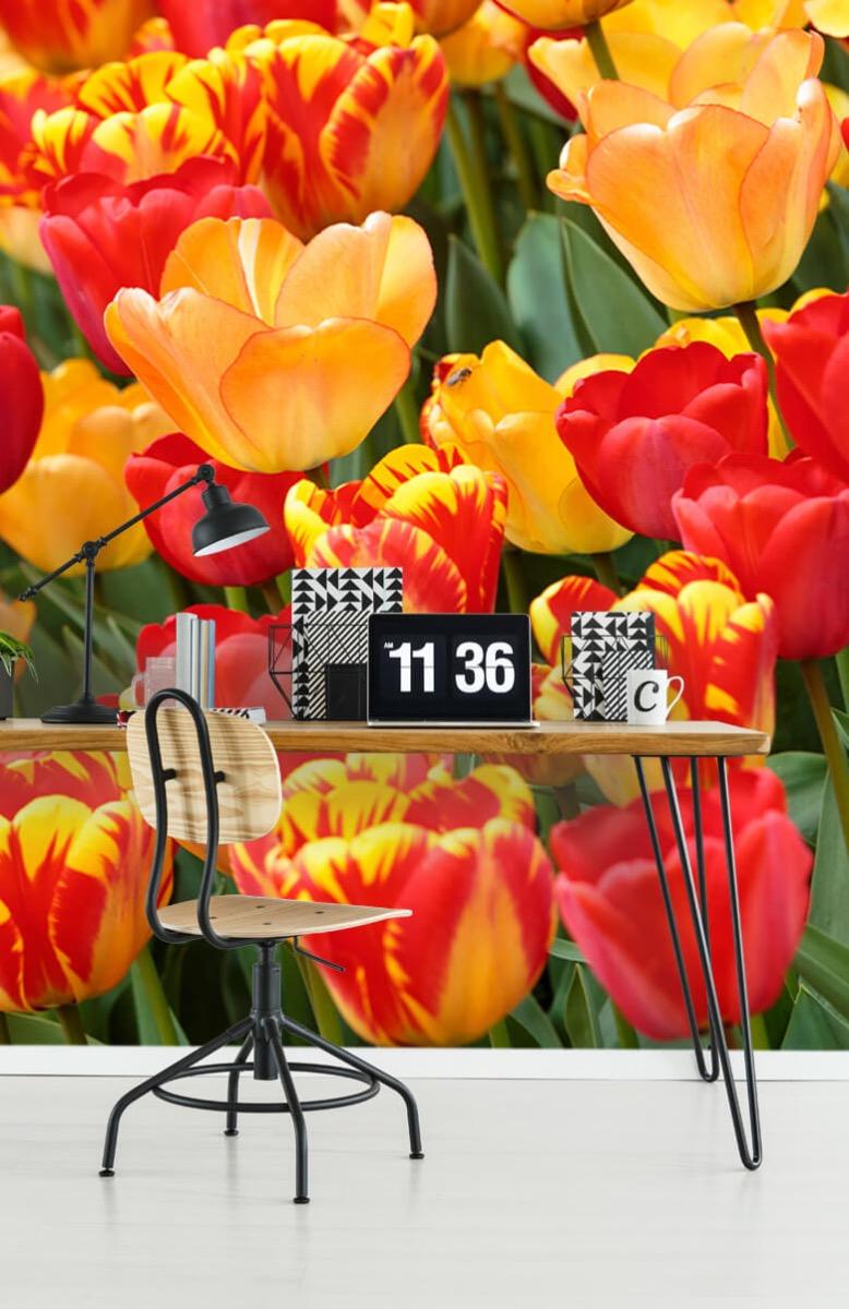 Bloemen, planten en bomen Gekleurde tulpen 10