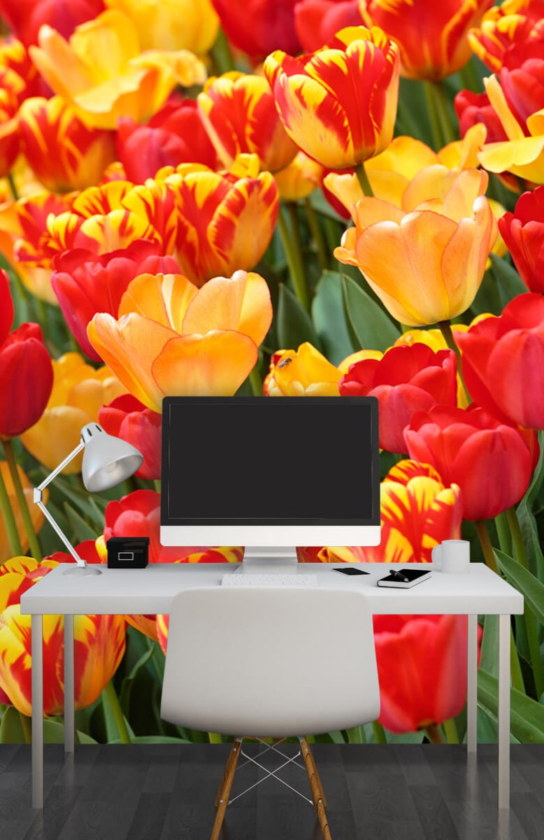 Bloemen, planten en bomen Gekleurde tulpen 11