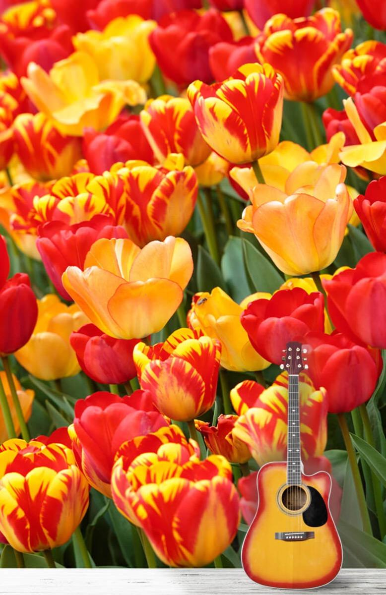 Bloemen, planten en bomen Gekleurde tulpen 1