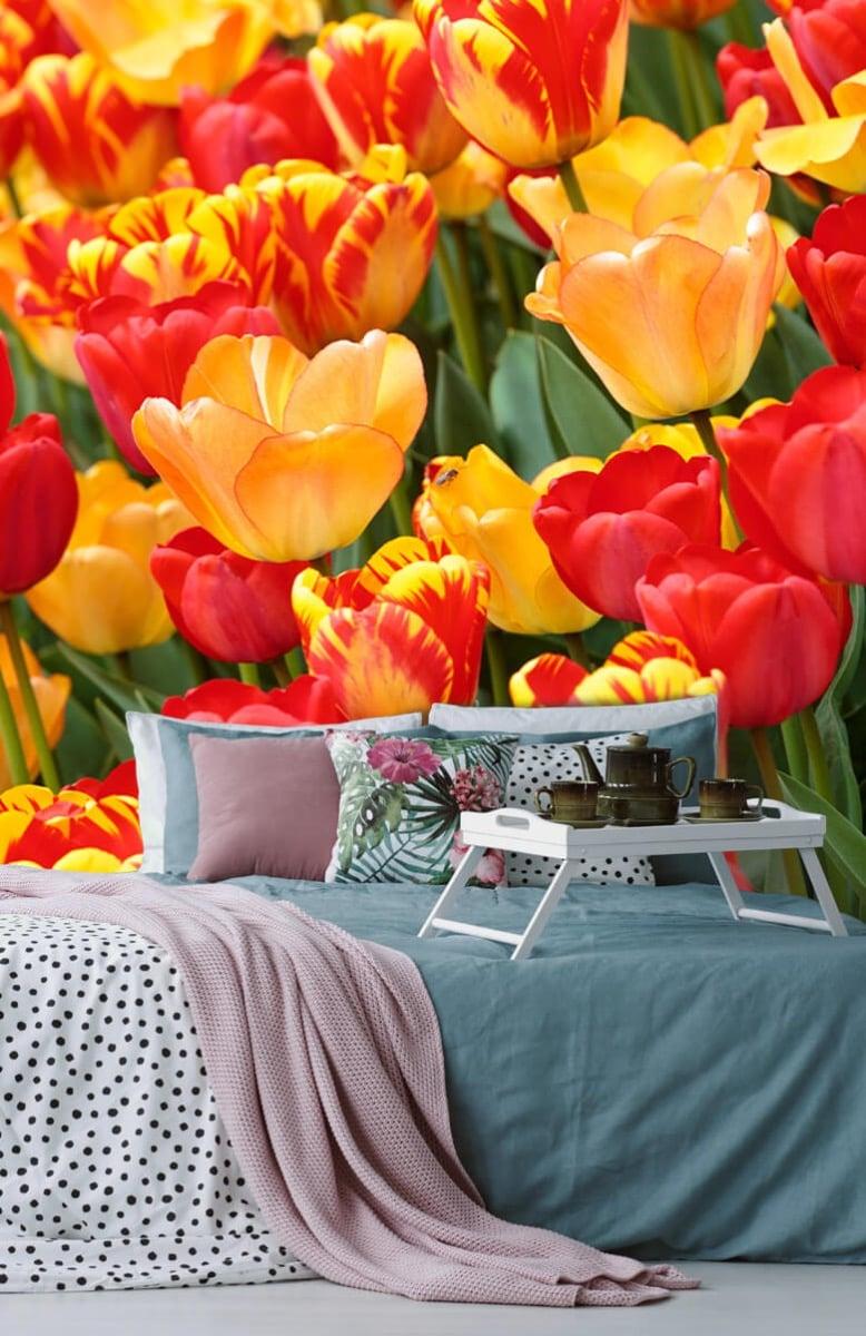 Bloemen, planten en bomen Gekleurde tulpen 12