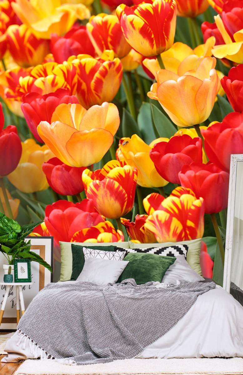 Bloemen, planten en bomen Gekleurde tulpen 13