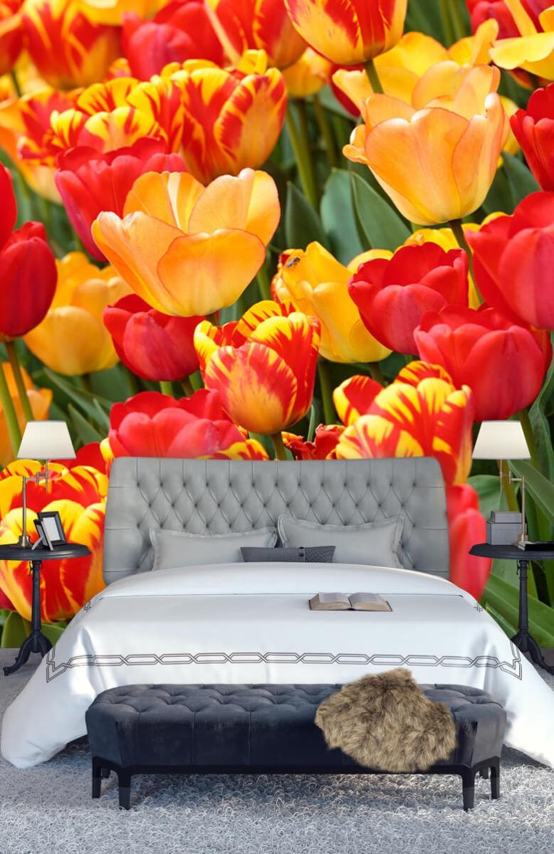 Bloemen, planten en bomen Gekleurde tulpen 14